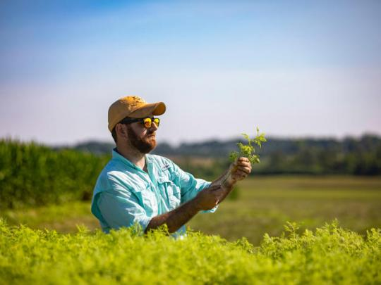 Photo of Kentucky Tobacco Research and Development Center research coordinator Patrick Perry holds an Artemisia annua seedling at Spindletop Farm.